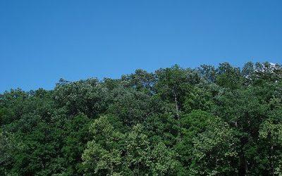 rp_blue-skies.jpg