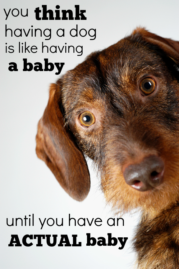Your dogs are only your babies until you have actual babies